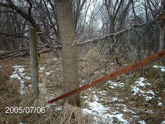 Deer hunting in iowa     Deer Hunting in the Great State of Iowa  #iowa deer hunting  #deer hunting