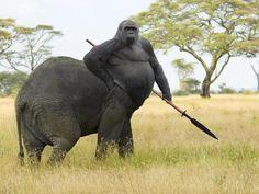 Gorilla Vs Elephant The Most Weird And Scary Photoshopped Hybrid Animals You'll Ever See • BoredBug