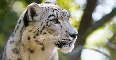 Ghost Cat, Cats, Animals, Gatos, Animales, Animaux, Animal, Cat, Animais