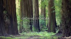 "Growing is Forever: I internalized the belief that ""Growing never stops when you want an extraordinary Life."""