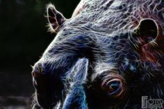 """Animals of Light"" - Tutta la galleria su -> http://www.fotolibera.it/galleria/animals-of-light/"