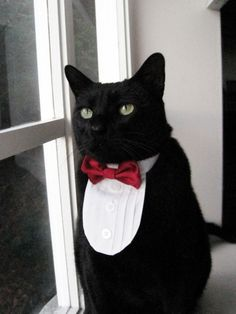 i thought the pink english lady on housewives was tacky for dressing her rat, but my little macy would be so cute in a tux (if she was a boy)
