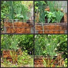 Milk Crate Herb Garden - Cottage in the Oaks Garden Art, Garden Plants, Garden Cottage, Container Gardening, Gardening Tips, Urban Gardening, Urban Farming, Milk Crates, Garden Projects
