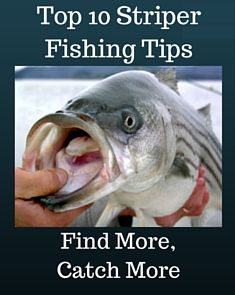 Free Download: 10 often overlooked tips that will help you catch more Stripers.