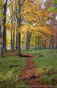 """Autumn Colours, Phoenix Park, Dublin, Ireland"""