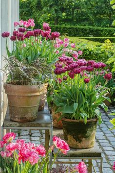 Backyard Garden Outdoors Beautiful tulips in a beautiful purple palette. They are a part of a large container garden with around tulips. Here, the pots are placed in different heights which creates depth in the garden and that is pleasing to look at. Purple Palette, Pot Jardin, Garden Borders, Types Of Plants, Garden Styles, Garden Planning, Garden Pots, Balcony Garden, Garden Inspiration