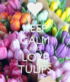 KEEP CALM AND LOVE TULIPS - by JMK