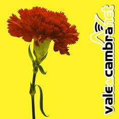 25 de Abril 2013  #ValeDeCambra