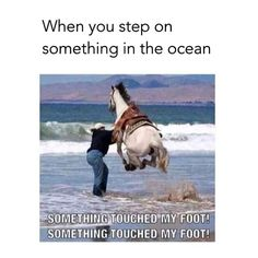 Animals - Horses Funny - Funny Horse Meme - - More like someone stole my dad's picture Yeah. My dad took this pic while we were at Morro Bay The post Animals appeared first on Gag Dad. Funny Horse Memes, Funny Horse Pictures, Funny Horses, Crazy Funny Memes, Really Funny Memes, Stupid Funny Memes, Funny Relatable Memes, Haha Funny, Hilarious