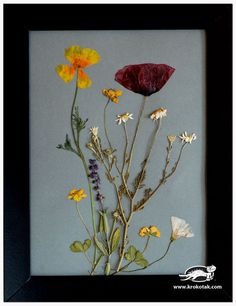 Pressed Flowers Picture Frames