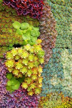 Wall of Succulents: Instead of framing a picture, why not a whole garden? Here, cuttings of assorted #succulents knit together to create colorful, textural living tapestries.