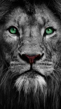 Art Discover Lion Eyes iPhone Wallpaper - Best of Wallpapers for Andriod and ios Lion Wallpaper Iphone Watercolor Wallpaper Iphone Animal Wallpaper Iphone Wallpapers Hd Backgrounds Hd Desktop Animals Beautiful Cute Animals Beautiful Sky Lion Wallpaper Iphone, Animal Wallpaper, Iphone Wallpapers, Hd Backgrounds, Hd Desktop, Vintage Wallpapers, Lion Wall Art, Lion Art, Animals Beautiful