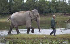 Phnom Tamao Wildlife Rescue Center - Cambodia
