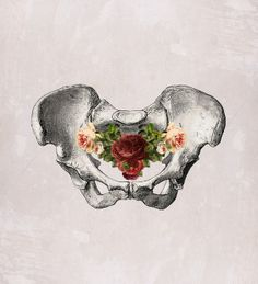 from 'anatomy and roses' series, MizEnScen the botanical holding of reproduction. Human Anatomy Art, Illustration Art, Illustrations, Medical Illustration, Medical Art, Medical Drawings, Gcse Art, Dark Art, Art Inspo