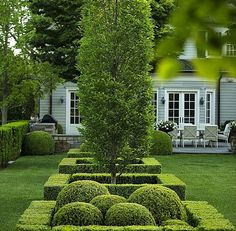 Boxwood and hedges.