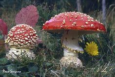 Amanita muscaria-Foto y Ficha técnica - Setas y Sitios Types Of Mold, Enchanted Wood, Mushroom Fungi, Mother Nature, Stuffed Mushrooms, Mori Style, Magic, Autumn, Crystals
