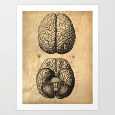 Vintage Anatomy. Brains poster. Human Body. Art Print by Curious Prints - $17.00