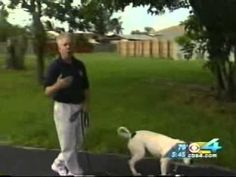 """How to get your dog to """"COME"""" every time with the Miami Dog Whisperer"""