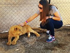 """When she saw this #photo without her #glasses my #mom said: """"Where did you find that #puppy and what kind of #dog is it? It looks #weird."""" Well mom it looks weird because it is not a dog. It is a #cat. #big one called #lion Look on her #face #priceless  #mother #opinion #johannesburg #southafrica #mamaafrica #throwback #funny #humor #crewlife #babylion #cuddle #skechers #crouch #ground #safaripark #safari http://quotags.net/ipost/1645980419314787103/?code=BbXsnh4gaMf"""