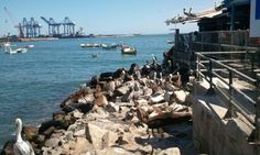 I was here and I fed Sea Lions and Seaguls! San Antonio, Chile
