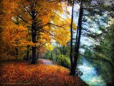 Golden Path -