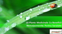 cool 10 Plante Medicinale Cu Beneficii Nemaipomenite Pentru Sanatate Vivasan/ Vivasan Romania
