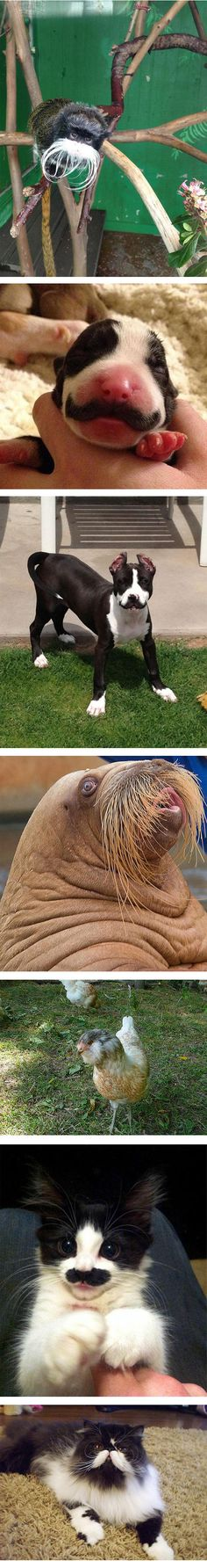 """We """"mustache"""" you: do you wish your pet looked as suave and distinguished as these do? #FunnyFriday"""
