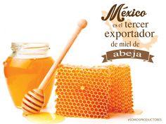 México es el tercer exportador de miel de abeja. SAGARPA SAGARPAMX #SomosProductores