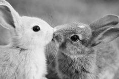@Alexandra Nicolas Look at those bunnies!