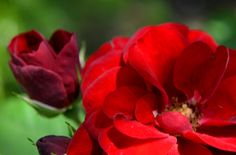 El Taller De La Brujamar Flores Pimpollos