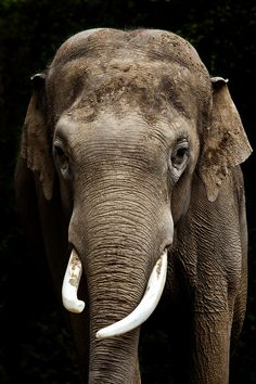 """""""Elephant"""" by Ander Aguirre on 500px.com"""