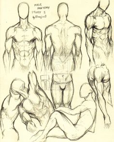 Male Anatomy Study 1 by 0ImagInc0 on deviantART