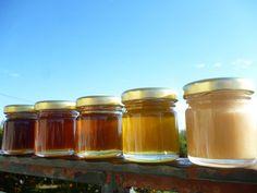 Όλες οι ποικιλίες μελιού που καταφέραμε να συλλέξουμε φέτος! All the honey varieties we collected this year!