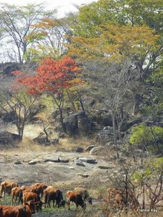 Matabeleland Zimbabwe History, Zimbabwe Africa, African Tree, David Livingstone, Viewing Wildlife, House On The Rock, All Nature, East Africa, Continents