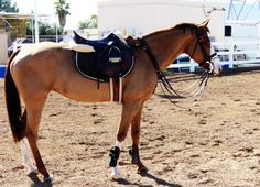 "scarlettjane22: "" Magic horses """