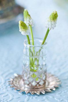 Vita pärlhyacinter.(White pearl hyacinths.)   skonahem.com