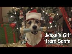 Jesse's Christmas Webisode: Santa's Gift (I ADMIRE SO MUCH THE PEOPLE WHO WORKED HARD TO TRAIN THIS DOG TO DO EVERY TRICK IN THE BOOK!!  UNBELIEVABLE DOG!!  ; )