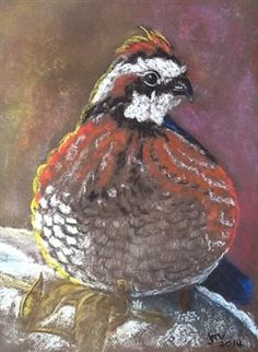 Expressive 4x Barbary Partridge Hatching Eggs laying Now Pet Supplies