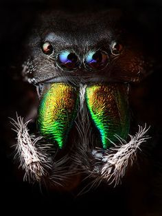 amazing spiders   ...........click here to find out more     http://googydog.com