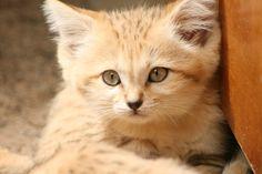 Wild Katzen Baby von matrix-22 - Galerie - heise Foto   heise Foto