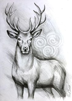 ORIGINAL deer art stag pencil drawing graphite home decor illustration animal art gift wall decor narteck on etsy Cool Pencil Drawings, Pencil Drawings Of Animals, Pencil Drawing Tutorials, Art Drawings Sketches, Drawing Ideas, Drawing Animals, Animal Sketches Easy, Pictures For Drawing, Joker Pencil Drawing