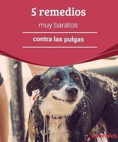 5 remedios muy baratos contra las pulgas  Para nadie es un secreto queuno de los mayores problemas que puedes tener con tu perro son los pulgas. #remedios #consejos #pulgas #perro