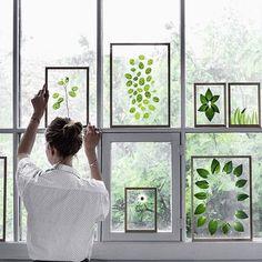 Blätter, Blumen, Bilder / Marco, cuadro, hojas, flores / Picture, flowers, leaves