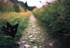 Kitty peeking by the pathway.