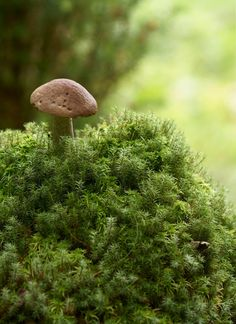 This hub outlines the nitrogen cycle, its importance, and how humans affect it. Nitrogen Cycle, Mushroom Fungi, Tiny Mushroom, Mousse, Walk In The Woods, Vintage Beauty, Mother Earth, Nature Photography, Stuffed Mushrooms