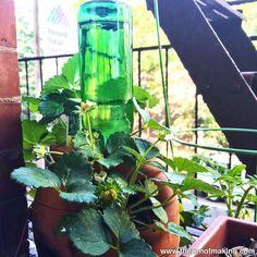 ECO-RECICLAJE: Una botella de vidrio como sistema de riego