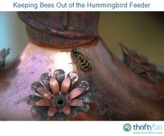 This is a guide about keeping bees out of he hummingbird feeder. Bees and hummingbirds are often found in the same places in your garden. However, if you are putting out food for the hummingbirds it can attract an unwanted amount of bees.