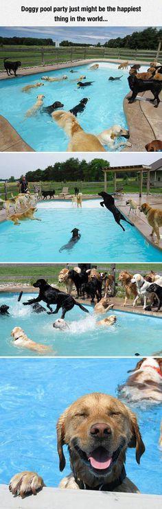 guaooooooooooo diera que si me vendieran una casa con piscina y perros no lo pensaría dos veces para comprarla