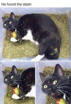 68 Of Today's Freshest Pics And Memes - Random Crap - Katzen Funny Animal Jokes, Funny Cat Memes, Cute Funny Animals, Funny Animal Pictures, Animal Memes, Cute Baby Animals, Funny Cute, Animals And Pets, Cute Cats