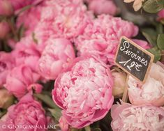Paris Photography  Paris Peonies in Parisian by GeorgiannaLane, $30.00